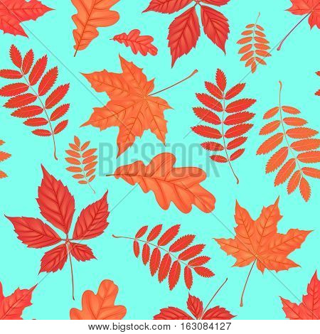 Seamless pattern with autumn parthenocissus, oak, rowan, maple foliage. Creative vector illustration in cartoon style.
