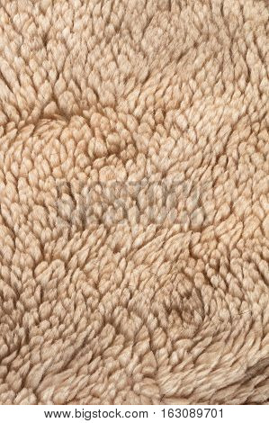 the abstract background texture of natural fur sheepskin