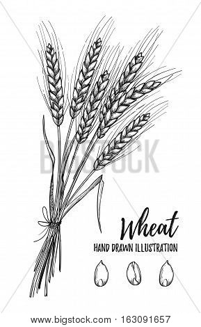 Hand Drawn Vector Illustration - Wheat. Tribal Design Elements. Perfect For Menu, Cards, Posters, Pr