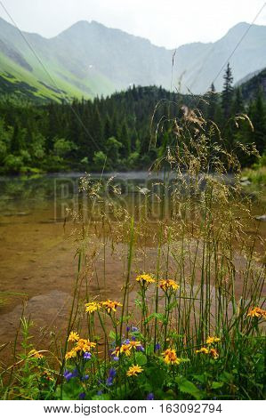 Colorful Countryside View In Carpathians