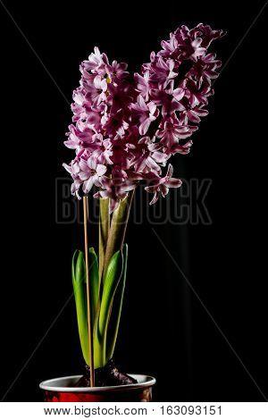 Beautiful Defocus Blur Background With Tender Flowers