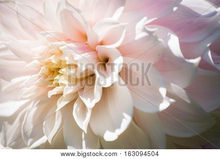 Beautiful Defocus Blur Background With Tender Flowers