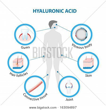 Hyaluronic Acid in the human Body. vector