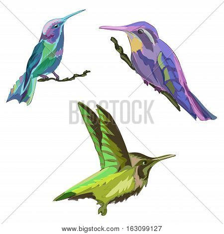 Blue, green, purple tropical birds, colorful, isolated