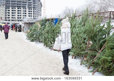 Sale of fir-trees in the city in the winter afternoon before New year