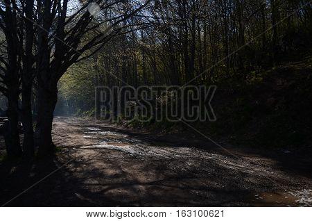 Ankara Çubuk Karagöl'de ağaçlar arasından yansıyan güneş ışınları, gölgeli bir orman yolu