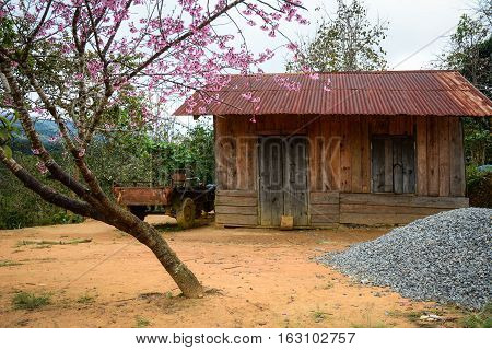 Small Countryside House With Cherry Tree