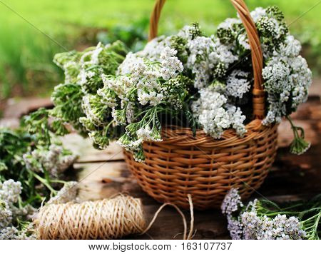 white yarrow in basket ( close up )