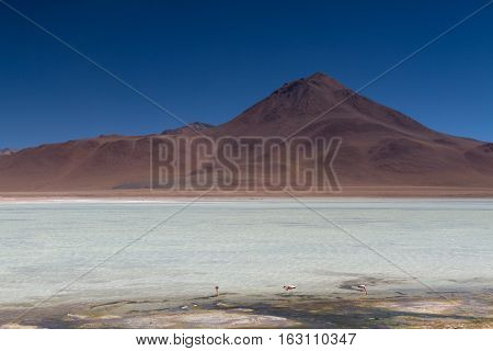 Volcano at the Laguna Blanca Altiplano Bolivia