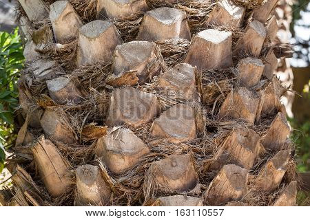 palm tree trunk close up background texture
