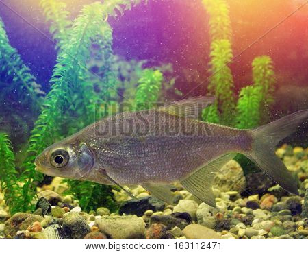 Fresh-water Fish