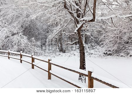 a blanket of fresh snow in a winter scene
