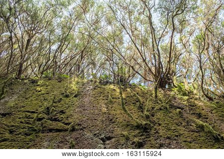 Moss, Roots And Trees ,overgrown Nature