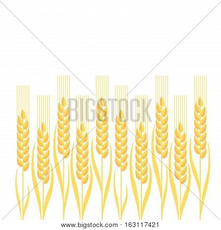 gold wheat vector illustration ion white background