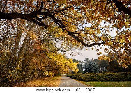 Ukraine, Askania-Nova biosphere reserve. In the autumn garden.