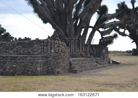 Tree growing through the Ruins at the Mesoamerican archaeological site Sultepec-Tecoaque known for its circular