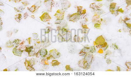 background dead leaves falling asleep snow trees