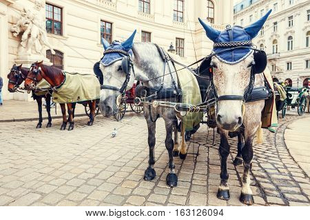 Horse-driven carriage at Hofburg palace in Vienna Austria