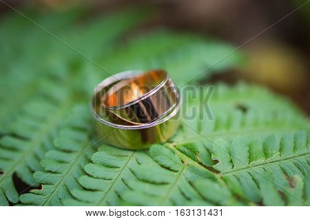 infinity sign of the rings wedding rings on a green backgroundwedding bands wedding rings on leaf of fern
