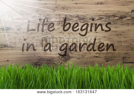 English Quote Life Begins In A Garden. Spring Season Greeting Card. Sunny Aged Wooden Background With Gras.