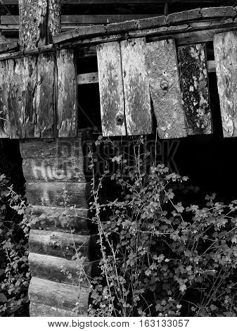 The side of an old wooden porch that's rotting away and being swallowed by bushes on a spring day in Eastern Oregon .