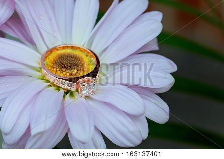 Rings On White Daisy Love Valentine's Day  Gerbera And Wedding Gold