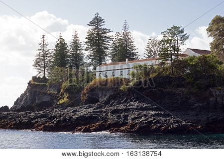 Tall conifer trees on a rocky coast of Sao Miguel Island. View on a coastline of Azores archipelago Caloura Portugal.