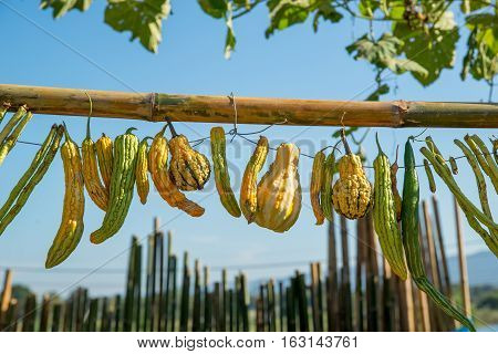 Close-up detail of multiple gourds beans bitter melons and luffas freshly harvested and hung on a wooden pole with wire. Agriculture and organic vegetables concept. poster