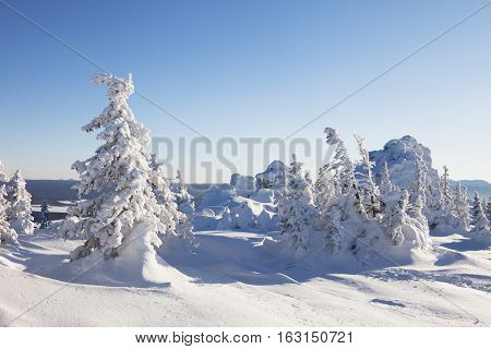 Snow Covered Spruces And Rocks. Mountain Zyuratkul, Winter Landscape.