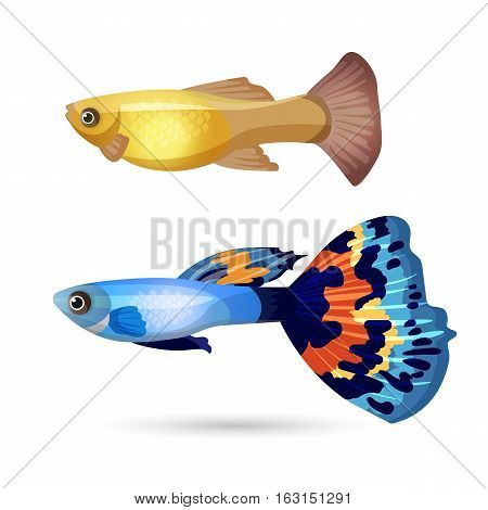 Fish Poecilia reticulata and carp isolated on white. Blue fish with colorful tail and yellow aquarium fish. Underwater pets, realistic characters. Create your aquarium with editable elements. Vector