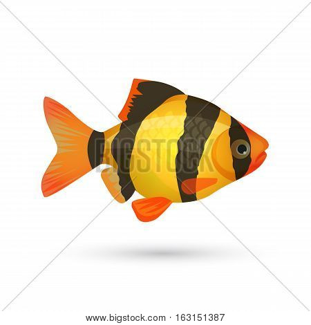 Clown loach tiger aquarium fish isolated on white. Botia catfish in yellow and black colors. Marine striped zebra fish. Close illustration of underwater marine inhabitant. Vector illustration