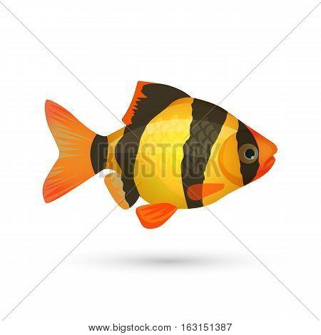 Clown loach tiger aquarium fish isolated on white. Botia catfish in yellow and black colors. Marine striped zebra fish. Close illustration of underwater marine inhabitant. Vector illustration