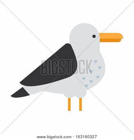 Gull flight bird and seabird gull. Natural larus beach free bird, wildlife seabird cartoon looking gull.