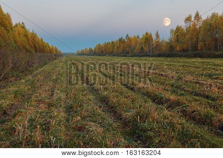 Autumn Landscape With Mown Field