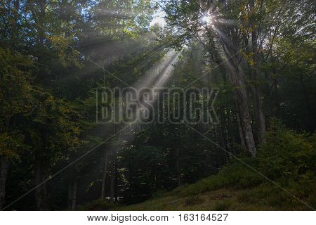 Sunbeams penetrating green forest. Autumn beginning so some leaves are yellow.