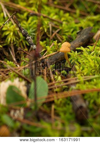forest floor with small mushrooms and pine needles
