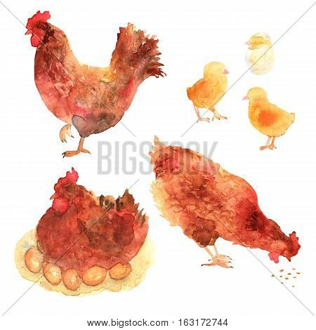 Chicken hand drawn set in watercolor. Chickens baby chick and egg illustrations. Rural natural bird farming.