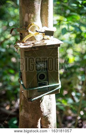 Camera Attached To A Tree, Used By Hunters To Spy Wild Animals,