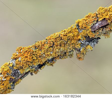 picture of a yellow funghi on a tree close-up