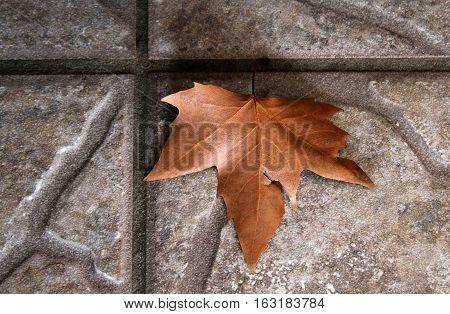 Hoja de arce caída sobre pavimento de cemento