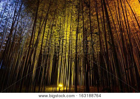 Natural bamboo background illuminated by colorful lights at night during the Arashiyama Lantern festival