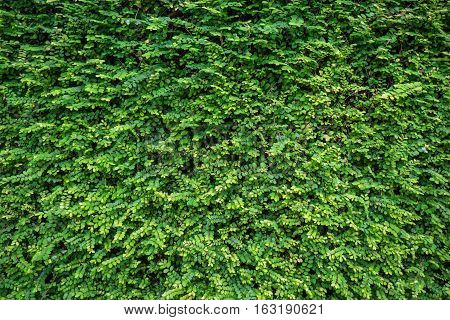 Green and yellow Leafs wall texture background