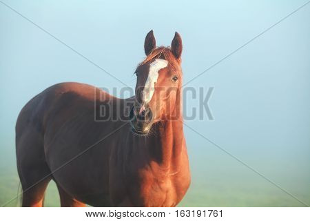 brown horse on pasture in morning sunlight