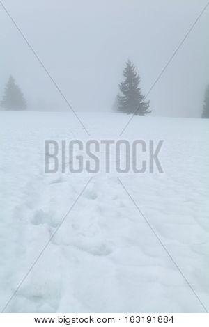 winter foggy day in mountains Feldberg Germany