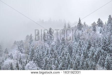 snowy mountain forest in dense winter fog