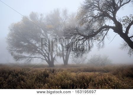 Rural field with leafless deciduous trees surrounded by a cold fog