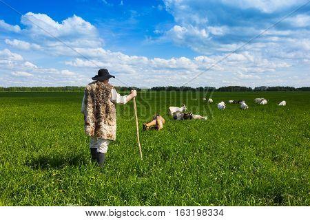 Shepherd And Goats