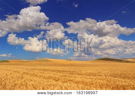 RURAL LANDSCAPE SUMMER.Between Apulia and Basilicata: hilly landscape with cornfield dominated by a clouds.ITALY. Farmhouse on a hill between fields of grain.