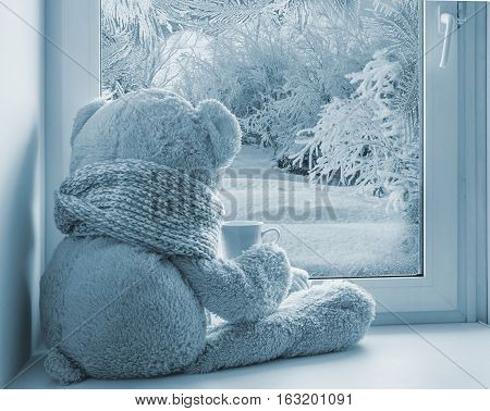 Bear Sitting And Looking In The Window
