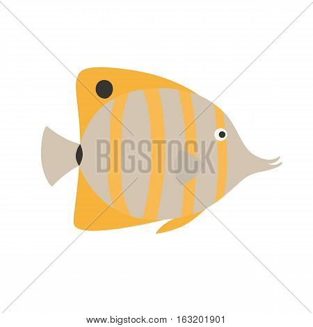 Copper Banded Butterfly fish, exotic fish, tropical marine fish